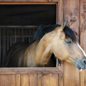 PELLET_POWER_7_HORSE-BEDDING